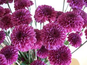 PurpleFlowers 010