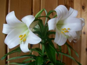 Lilly2010_2