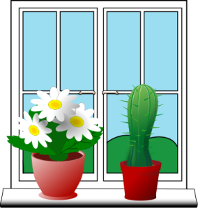 window_plants