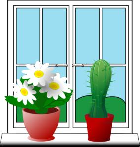 window_plants