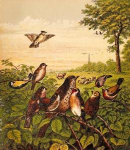 bird-images-53