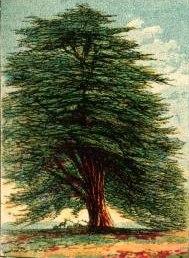 trees-08