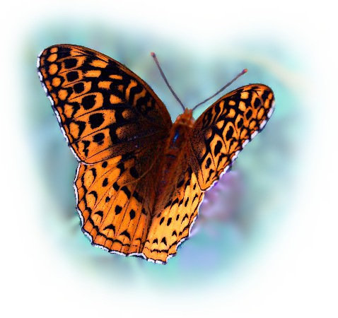 butterfly_graphic_3