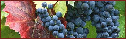 grapes_banner.png