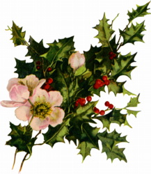 holly-blooms