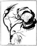 flower-03