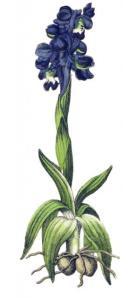 orchid-yonge