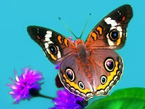 butterfly_graphic_2