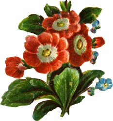 five-red-flowers