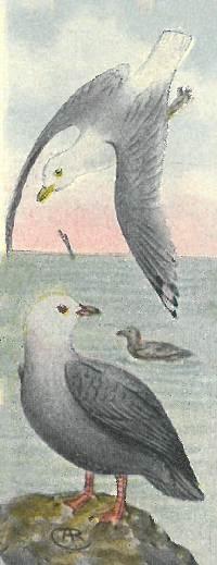 seagulls-reed