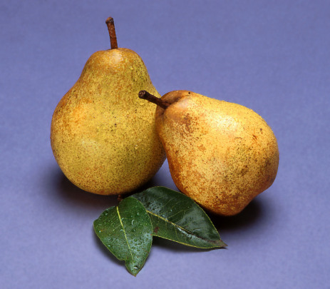 pears_picture