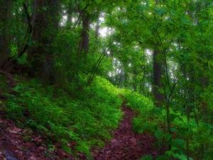 ferns_under_hardwoods_on_sunny_day