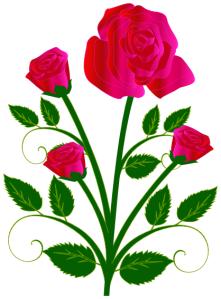 rose_blooming