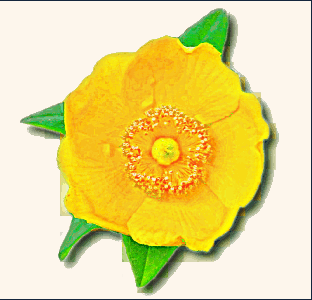 buttercup_clip_art