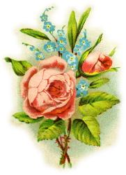 rose-vignette