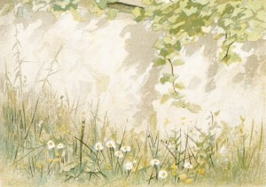 daisies-02