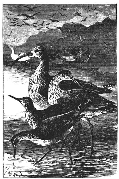 shore-birds-11