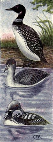 shore-birds-18