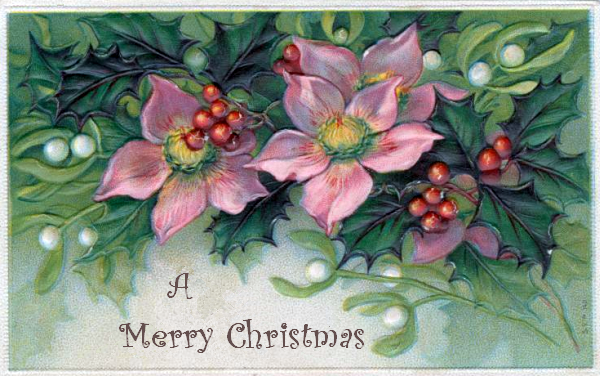 pink-christmas-flowers-2