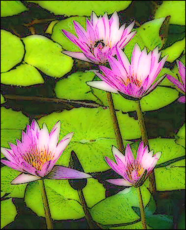 Water_lillies