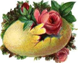 yellow-egg-flower