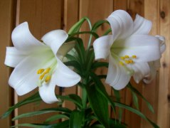 Lilly2010 006