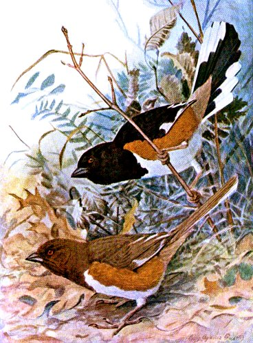 bird-images-07