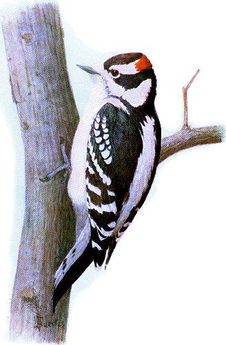 bird-images-11