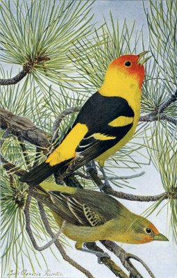 bird-images-22