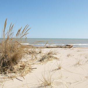 Beach032610 015