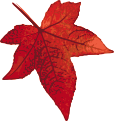 red_maple_leaf