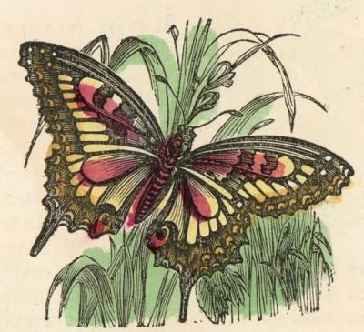 butterfly-05