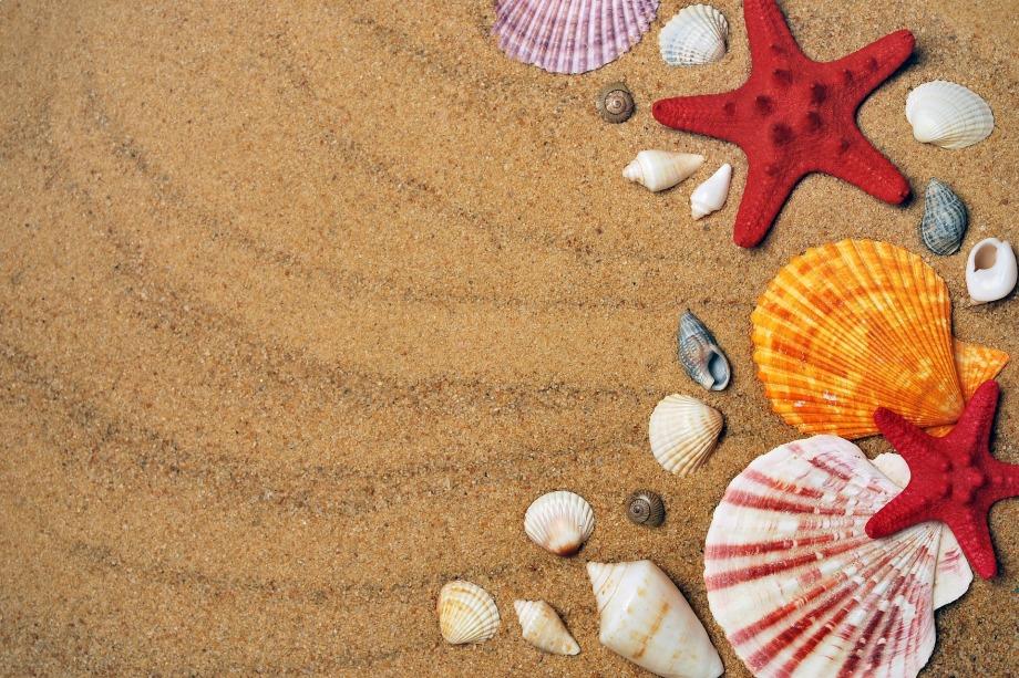 beach_shells_wallpaper
