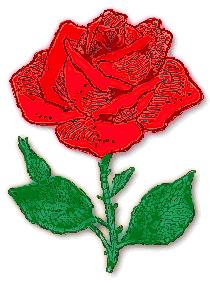 rose_sketchy