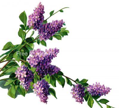 watermark_purple-flowers-3