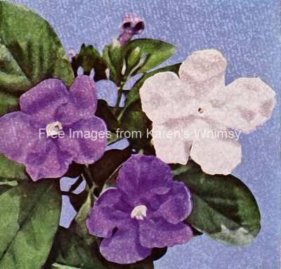 watermark_white-and-purple-flowers-5