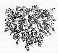 fruit-11