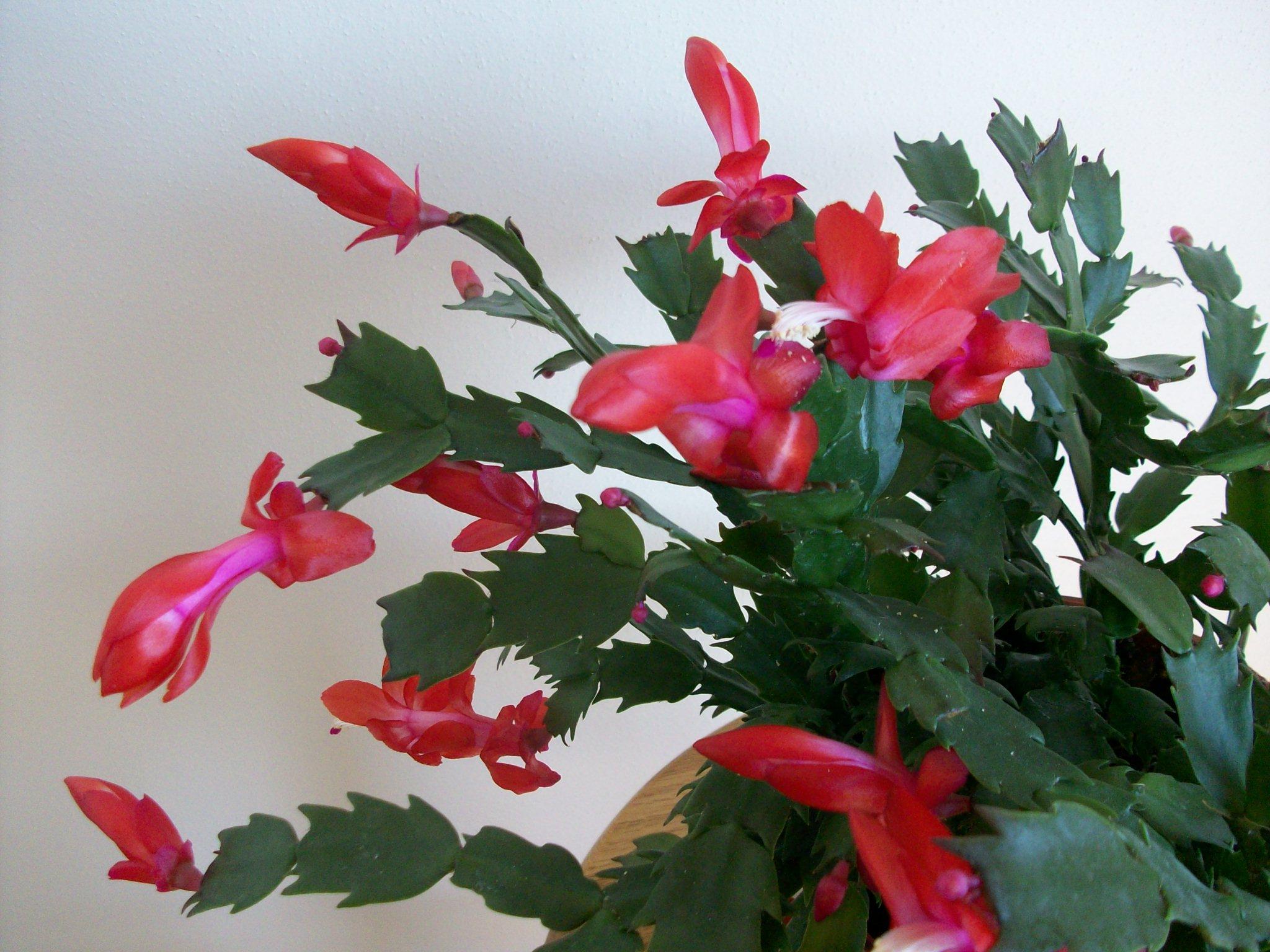 Cactus 007.jpg